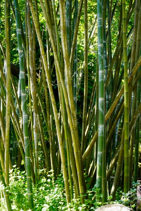 4BambooTrees